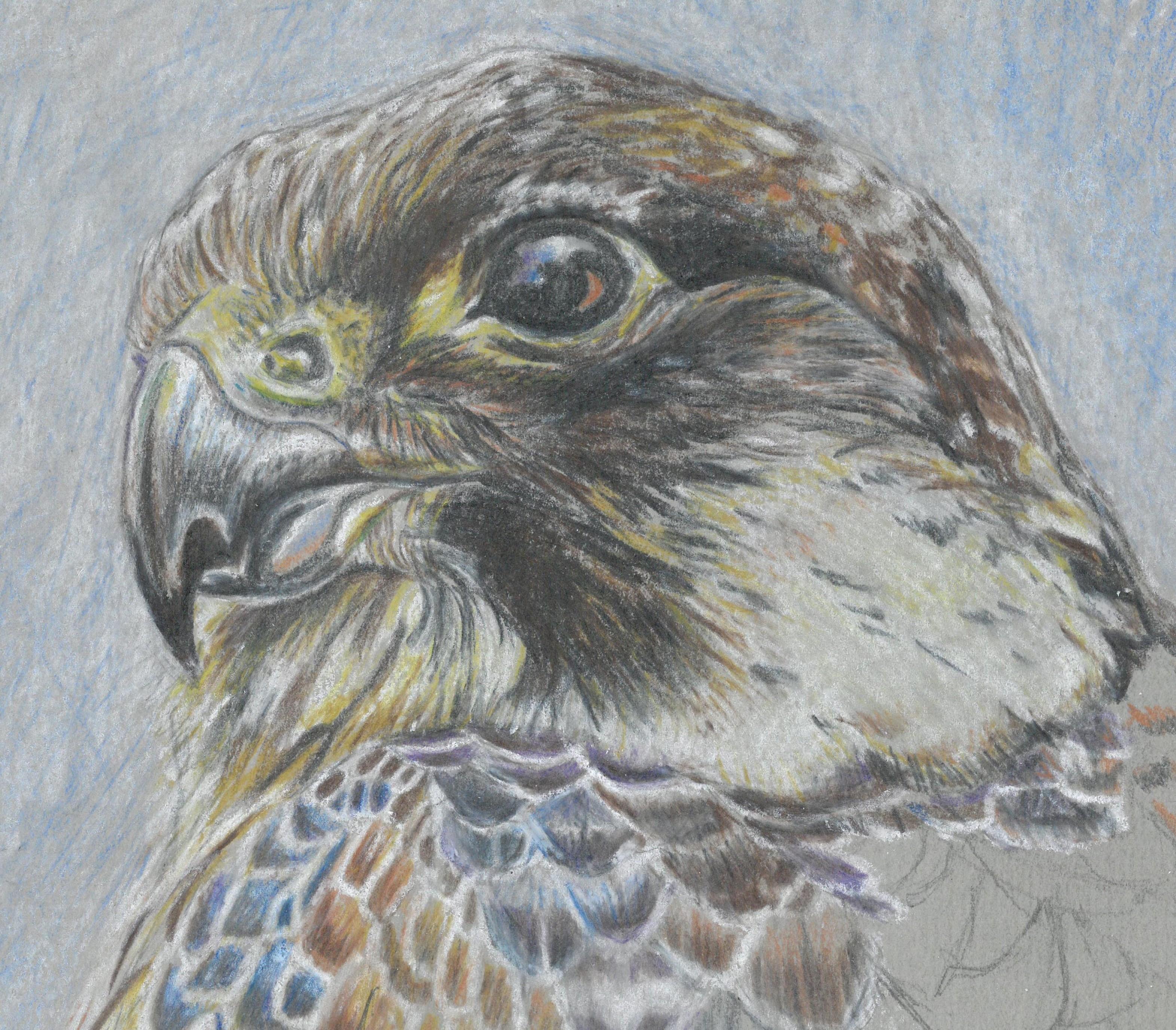perigrine falcon crop